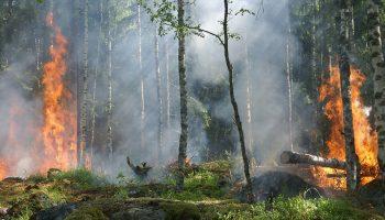 Was beachten bei Waldbrandgefahr?